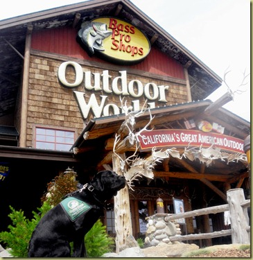 Sheba sitting outside the Bass Pro Shop.