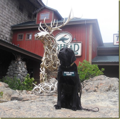 Sheba sitting outside of the Bass Pro Shop on a rock with a deer antler statue behind her.