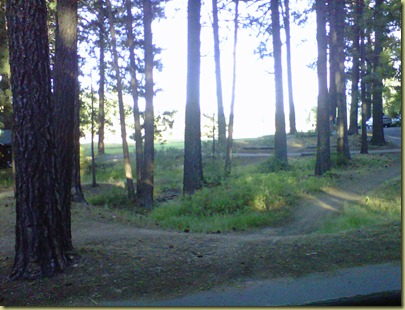 Photo of the tall trees and pathways.