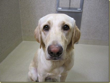 A close up of Reyna's face while she is in the kennel.  Sadness is in her eyes.
