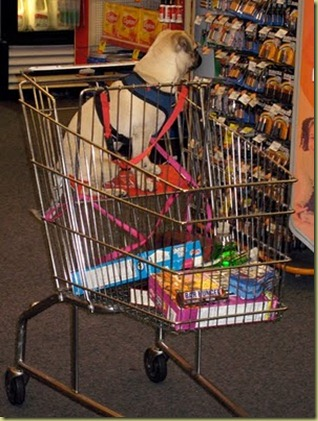 A fake service dog sitting in a shopping cart.