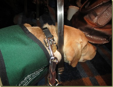 Vienna sleeping under the chair in the conference room.