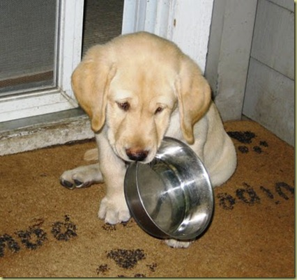 Reyna when she was a puppy sitting on the deck with her stainless steel bowl in her mouth telling us she thinks it's time to eat!