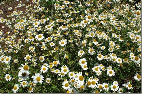 Flores VIII