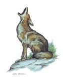 coyotehowl