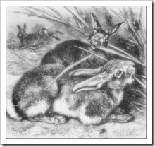 rabbits_2