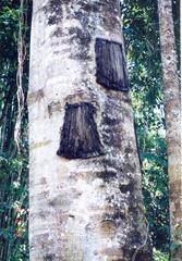 tree_burial