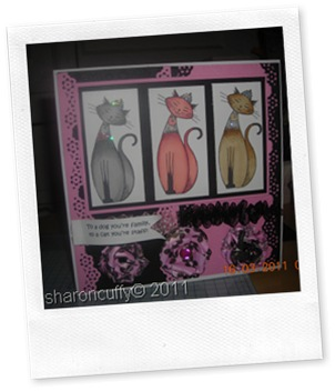 pampered pets range