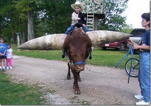 Animal with Big Horn (1)