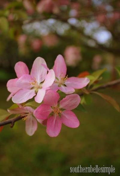 pink flower - ayla