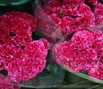 p&g street flowers