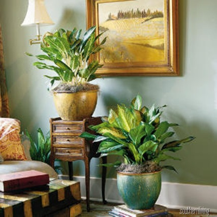 deborah-silver-bay-evergreen-houseplants-m