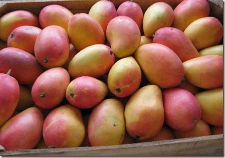abastos-mangos