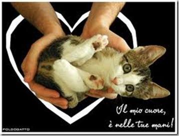 love-cats