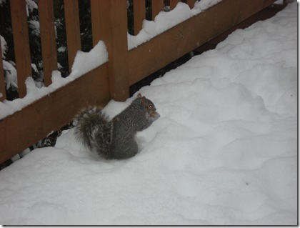 squirrels 021