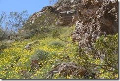 march 09 desert 035
