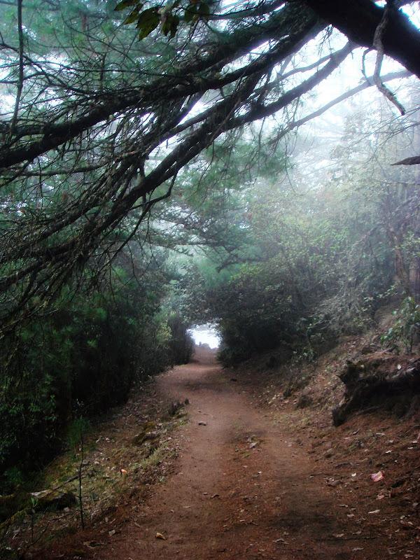 迷雾百草岭 - 银月 - 银月的博客