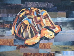 Mr. Turtle by collage artist Megan Coyle