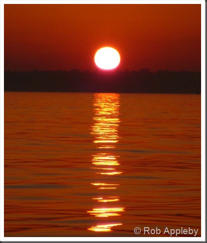 1202 sunset