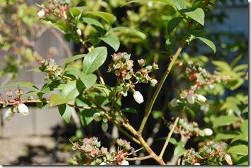 spring in the garden 009