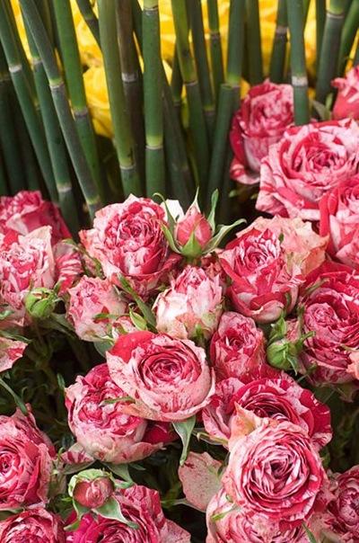 flores-manchadas