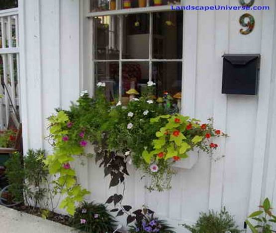 window_box_at_a_shop_window_in_Port_Royal