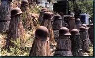 Παραδισιακές μελισσοφωλιές φτιαγμένες με άχυρα και καλάμια. Στην κορυφή έχουν τοποθετηθεί απο τους μελλισοκόμους κράνη Γερμανών και Γάλλων στρατιωτών του Α' Παγκοσμιου Πολέμου.