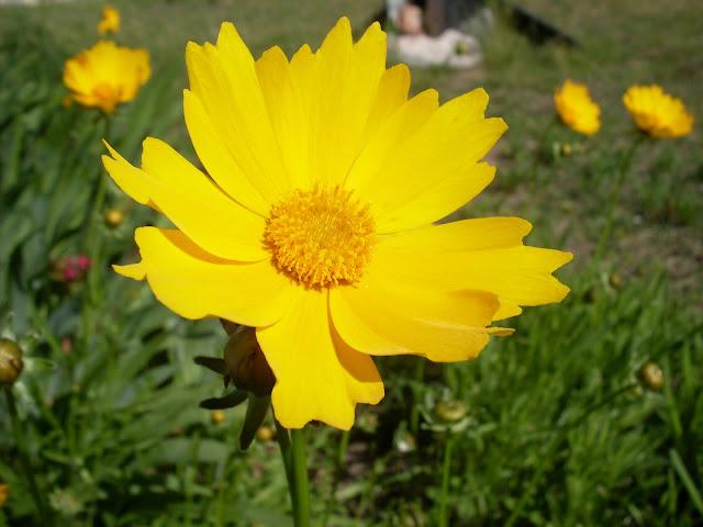 Una flor silvestre en la Web
