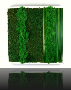 tableau_vegetal1