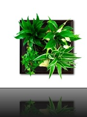 tableau-vegetal-depolluant-bois