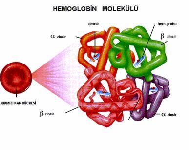 hemoglobin-molekul.jpg
