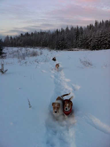 Lumisissa maisemissa