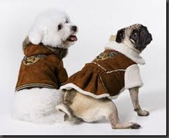 fashion dogs2