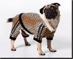 fashion dogs5