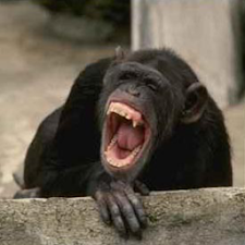 Chimp Sound Effects