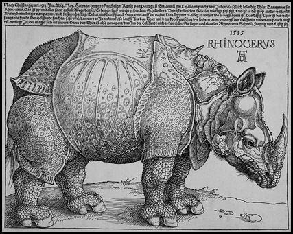 Durero Rinoceronte 1515