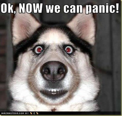 funny-dog-pictures-now-panic