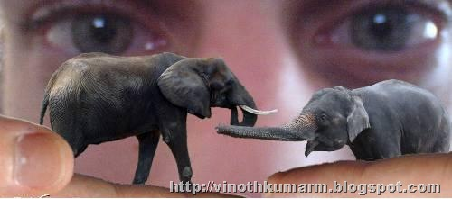 elephant toy in live action picture
