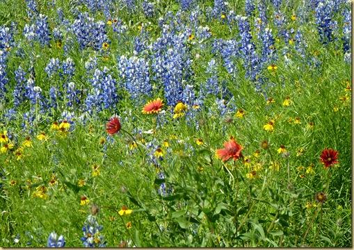 2010-04-24 - TX, Fredericksburg - Bluebonnets & Spring Flowers - 1036