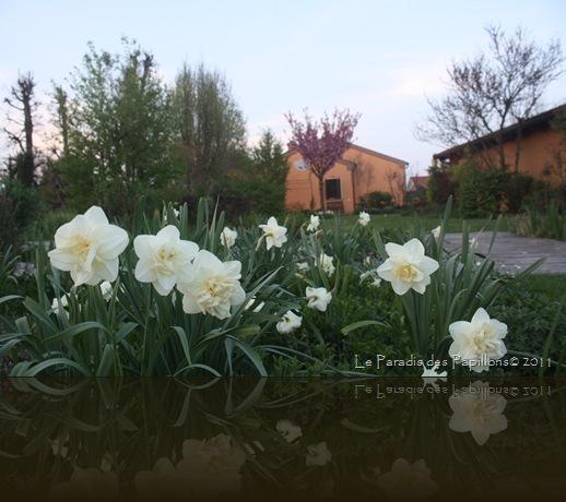 giardinomarzo2011 062