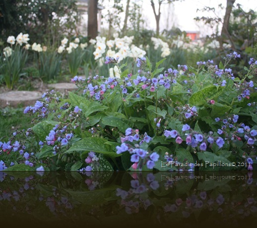 giardinomarzo2011 057