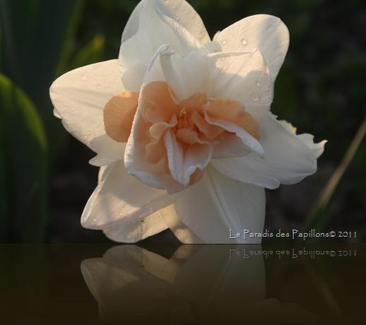 giardinomarzo2011 023