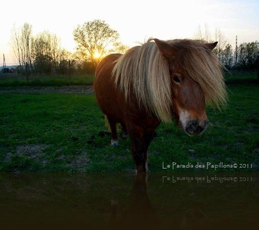 giardinomarzo2011 042