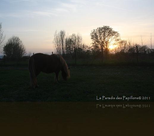 giardinomarzo2011 045