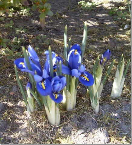 2011_03 Blumen im Garten (7)