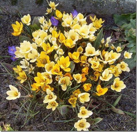 2011_03 Blumen im Garten (1)