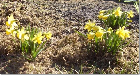 2011_03 Blumen im Garten (3)