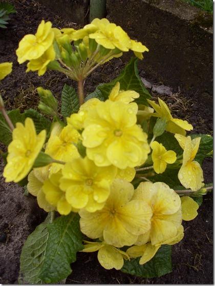 2011_04 Blumen im Garten (7)