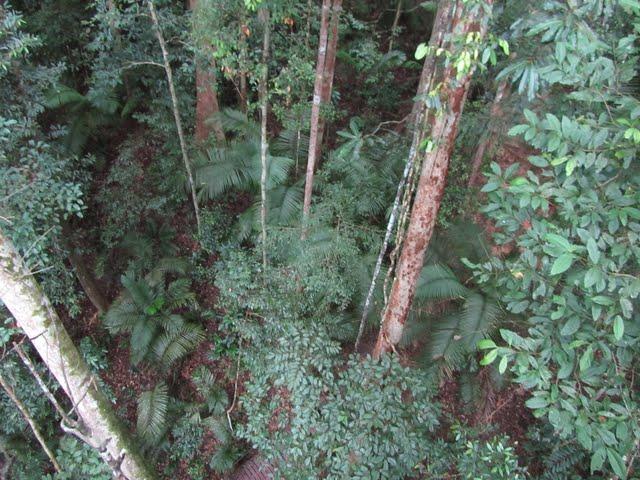 Taman Negara canopy work