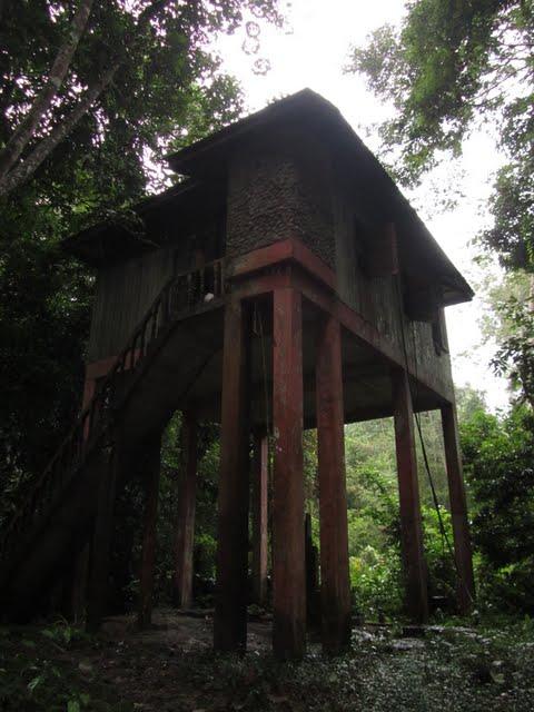 Taman Negara trek - hide
